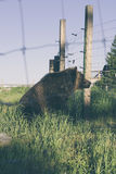 Brown Bear Sitting on Green Grass Photo Stock Photos