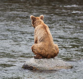 Brown Bear Sitting on a Stone Royalty Free Stock Images