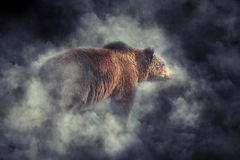 Brown bear in smoke. Big brown bear (Ursus arctos) in the forest. Bear in smoke Royalty Free Stock Photo