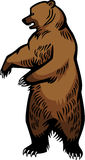 Brown Bear Standing Up. Illustration a brown or grizzly bear standing upright Stock Photos