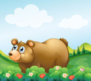A brown bear in the strawberry garden. Illustration of a brown bear in the strawberry garden Royalty Free Stock Photography
