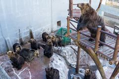 Brown bear together in zoo park Stock Photos