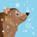 Brown bear among Stock Photo