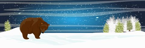 Brown bear is walking in the meadow. Spruce forest. Starlight Night royalty free illustration
