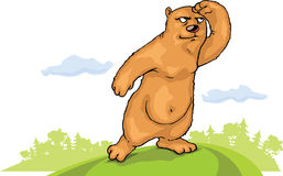Brown bear is watching Royalty Free Stock Images