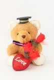Brown bear wearing a graduation cap and red roses. Stock Photography
