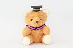 Brown bear wearing a graduation cap. Royalty Free Stock Photo