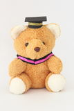 Brown bear wearing a graduation cap. Royalty Free Stock Photos