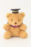 Brown bear wearing a graduation cap. Royalty Free Stock Photography