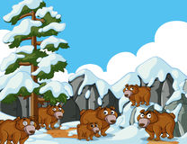 Brown bears in snow mountain. Illustration Royalty Free Stock Image