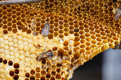 Brown beautiful honeycomb background Royalty Free Stock Photography