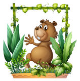A brown beaver Royalty Free Stock Images