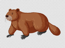 Brown beaver on transparent background. Illustration Royalty Free Stock Photos