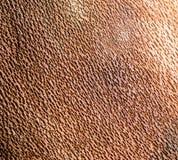 Brown beech bark inside closeup Stock Photos