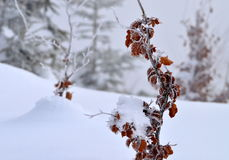 Brown beech leaves in ice Stock Photos
