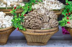 Brown beech mushroom on basket with various mushrooms Stock Images