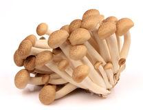 Brown beech mushroom. Isolated on white Royalty Free Stock Photography
