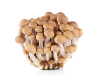 Brown beech mushroom. Isolated on white background Royalty Free Stock Photos