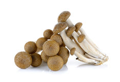 Brown beech mushroom isolated on the white background.  Royalty Free Stock Photo