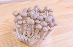 Brown beech mushroom, shimeji mushrooms in the package on wooden. Brown beech mushroom, shimeji mushrooms on wooden background Royalty Free Stock Image