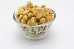 Brown beech mushroom Royalty Free Stock Photo