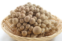 Brown beech mushroom. On white background Stock Photos