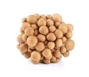 Brown beech mushroom Stock Photo
