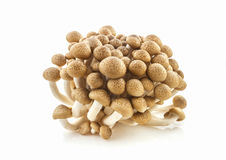 Brown beech mushroom on white background. Stock Photos