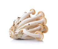 Brown beech mushroom  on white background Stock Photos