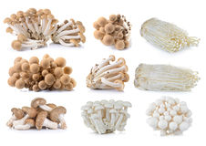 Brown beech mushroom , White beech mushrooms , Shiitake mushroom. Enoki mushroom Royalty Free Stock Photography