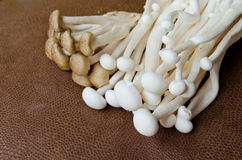 Brown Beech mushroom and  White Crab mushroom Stock Photos