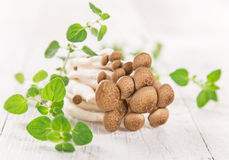 Brown beech mushroom on white wooden background. Stock Image