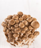 Brown beech mushroom on white wooden background. Stock Images