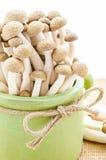Brown beech mushrooms. Stock Image