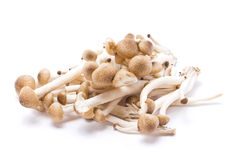Brown beech mushrooms. Stock Images