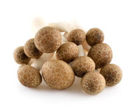 Brown beech mushrooms, Shimeji mushroom Royalty Free Stock Photos