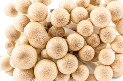 Brown beech mushrooms Royalty Free Stock Photos