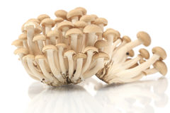 Brown beech mushrooms,  Royalty Free Stock Images