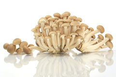 Brown beech mushrooms,  Royalty Free Stock Photo