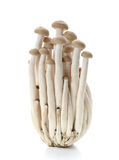 Brown beech mushrooms, Shimeji mushroom, Edible mushroom stock photography