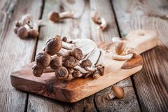 Brown beech mushrooms Royalty Free Stock Image