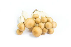 Brown beech mushrooms on White Background. Royalty Free Stock Photography