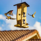 Brown and Beige Finch Birds Surround Bird House Royalty Free Stock Photography