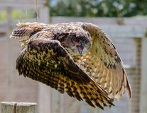 Brown and Beige Serpent Owl in Timelapse Photography stock photography