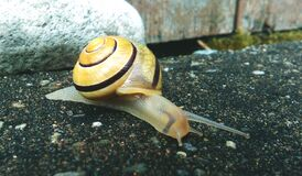 Brown and Beige Snail Stock Image