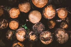 Brown and Beige Wood Logs royalty free stock image