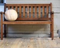 Brown bench with a white pumpkin. Sitting on it on the wooden floor porch and a grey brick wall Stock Photos