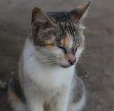 Brown biały kot na ziemi fotografia stock