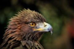 Brown Bird Stock Photography