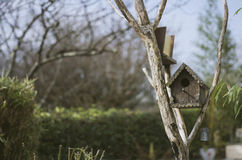 Brown Bird House on Brown Twig Royalty Free Stock Photo